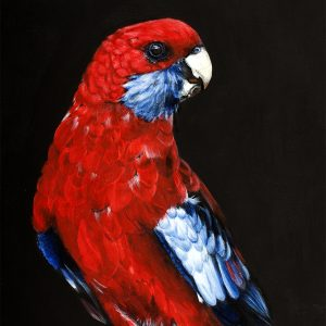 Fine art print of Rosella bird