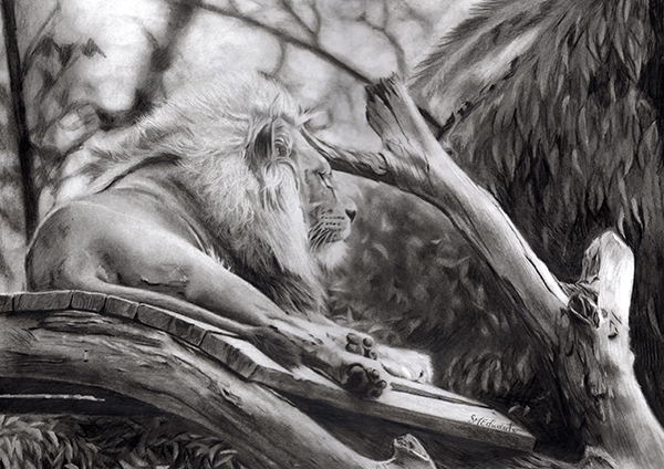 graphite art drawing of majestic lion