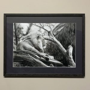 Animal drawing of lion in graphite